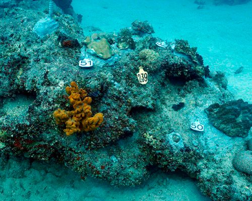 CSA Scientists Complete Coral Relocation Effort Prior to COVID-19 Outbreak