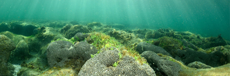 """""""Islands in the Sand"""" – a Book on Florida's Nearshore Hardbottom Reefs Co-authored by CSA's Dave Snyder"""