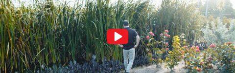 Design Landscape Architects